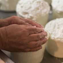 Le Stanzie - Azienda zootecnica - lavorazione dei formaggi freschi